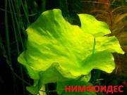 Нимфоидес и др растения. НАБОРЫ растений для запуска. ПОЧТОЙ и МАРШРУ