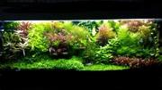 Удобрения(микро,  макро,  калий,  железо) для аква растений. ПОЧТОЙ отп