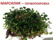 марсилия - ПОЧВОПОКРОВКА. - НАБОРЫ растений для запуска. Почтой отправ