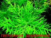 Синема деморфная - НАБОРЫ растений для запуска. ПОЧТОЙ ОТПРА