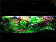 Удобрения(микро,  макро,  калий,  железо) для аквариумных растений. ПОЧТ