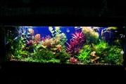 Удобрения(микро,  макро,  калий,  железо) для аквариумных растений. ПО-