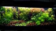 Удобрения(микро,  макро,  калий,  железо) для аквариумных растений.=/=